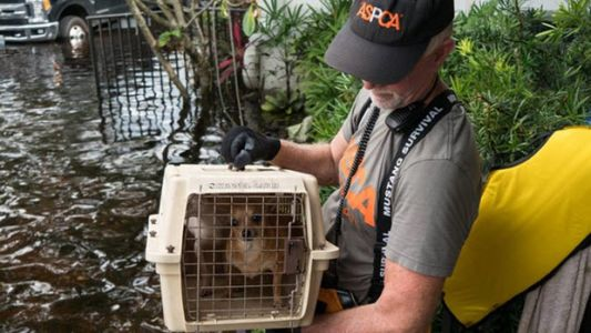 The Lesson Of Harvey and Irma: An Animal's Best Ally Is Its Community