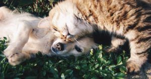 Are Dogs or Cats Better at Curing Loneliness?