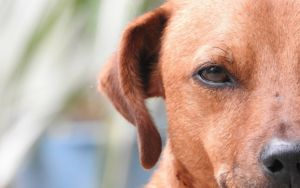 5 Unexpected Reasons Why Dogs Don't Like Certain People