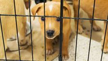 Landmark California Pet Store Ban Treats Animals As Pets, Not Products