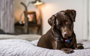 What To Know If Your Dog Has Nightmares