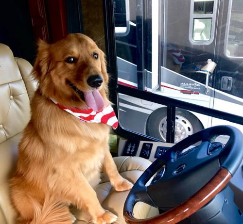 RV Travel Tips for Pet Lovers