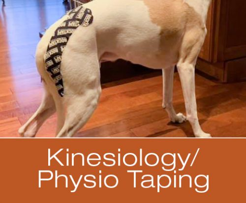 Have You Heard About Kinesiology/Physio Taping for Dogs?