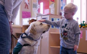 7 Signs Your Pup Would Make An Excellent Therapy Dog