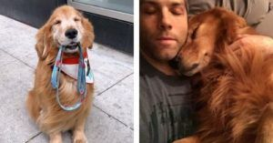 Sporty The Beloved Self-Walking Pup Loses Battle With Cancer