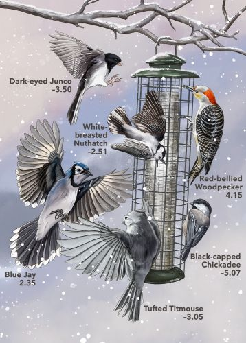 When 136 Bird Species Show Up at a Feeder, Which One Wins?