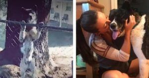 Woman Who Visited Chained Up Dog For A Year Is Finally Able To Rescue Her & Bring Her Home