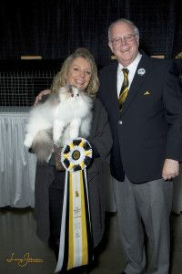 Cat Fanciers' Association, Royal Canin Announce Top Awards for International Cat Show