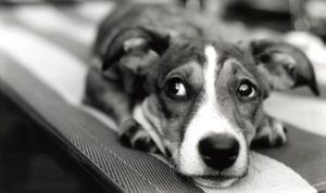 7 Safe & Natural Ways to Calm Down Your Dog