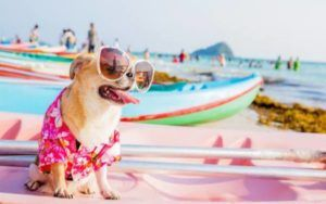 UK Travel Company Seeks Adventurous Pooch To Review Dog-Friendly Vacations