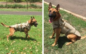 Hawaii Police Dog Stabbed, But His Life Was Spared Thanks To His Special Vest
