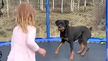 Girl And Dog Jump For 'Pure Joy' On Trampoline