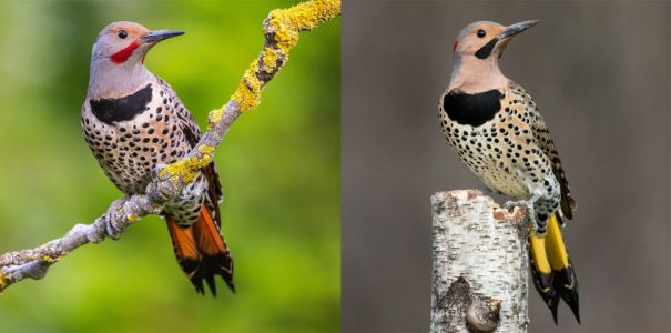 Flickers: The Closer You Look, The Less Different They Are
