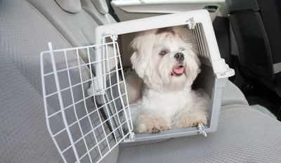 Dog Car Travel Tips: Crates, Harnesses, And Barriers