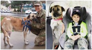 Dog Found Nearly Dead Recovers & Goes Home With Her Soldier, Thanks To Support From Customers Like You