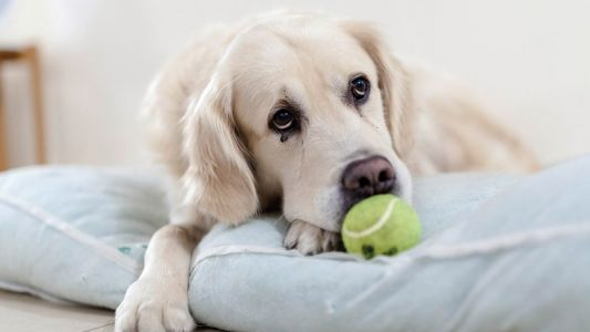 Is Your Dog Suffering with Urinary Stones?