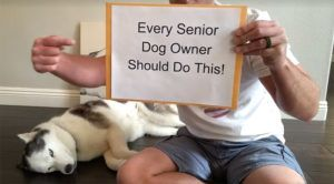 Making Memories: Every Senior Dog Owner Should Do This!