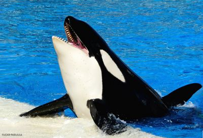 Animal Legal Defense Fund Responds to Death of Kasatka the Orca