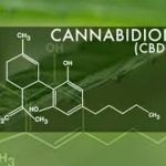 Pets and Pot: is CBD Oil safe for my pet?