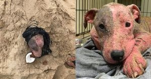 Dog Buried Alive on Hawaii Beach is Recovering with Help from a Team of Hopeful Rescuers
