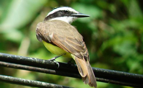 Pat's Costa Rica Bird List, 2021