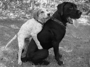 """9 Reasons Why Male & Female Dogs Hump, Even If They've Been """"Fixed"""""""