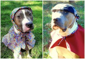 Dog Mom Gets Creative To Bring Out The Beauty In This Gorgeous Pit Bull Rescued From Dog Fighting