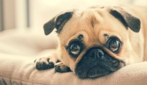 Everything You Need to Know About Urinary Tract Infections in Dogs