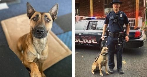 From Homeless Pup To Professional Police Dog!