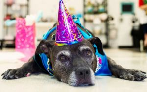 Senior Rescue Dog Lives Life To The Fullest Thanks To Compassionate Child