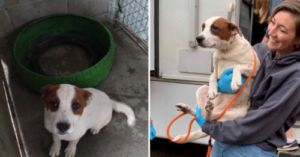 Two Adoptable Dogs' Rescue From A High-Kill Shelter In Mexico Was The Beginning Of A 1,000 Mile Plus Journey