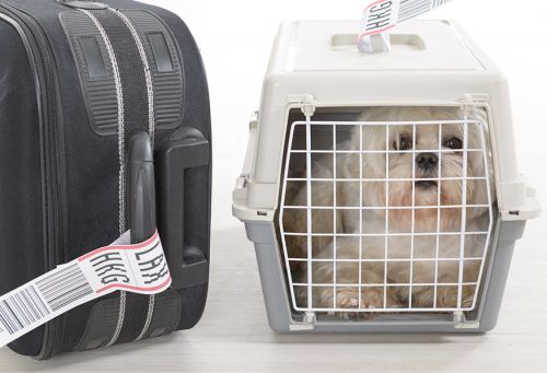 No Dog Should Die Aboard an Airline Flight