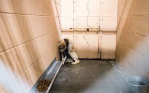 """Rescuer Calls Him The """"Most Shutdown Dog She's Ever Seen"""" - But Wait Til You See Him Now!"""