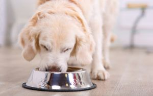 Five Dog Food Brands Recalled Due To Excess Vitamin D