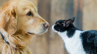 Did A Viral Study 'Prove' Dogs Are Smarter Than Cats? Not Quite