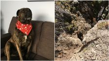 'Rare And Risky Canine Rescue' Saves Dog Trapped Above 98-Foot Cliff