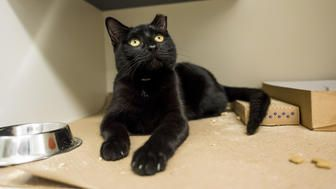 This Animal Shelter Is Turning Black Friday Into 'Cat Friday'
