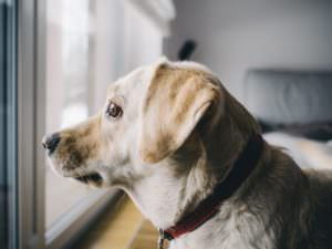 Do Dogs Have A Concept Of Time?