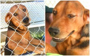 Dog Is Rescued After Family Locks Him In Pen & Moves Away