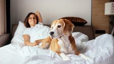 Women Sleep Better With Dogs Than With Human Partners, Study Says