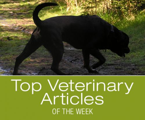 Top Veterinary Articles of the Week: Tick-Borne Infections Screening, Tramadol Efficacy, and more