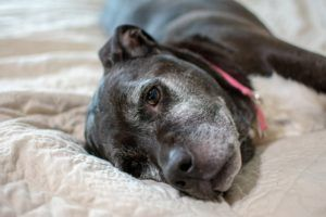 These 10 Canine Commandments Will Melt Your Heart