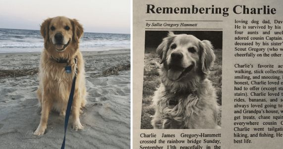 Woman Shares Heartfelt Obituary For Late Golden Retriever