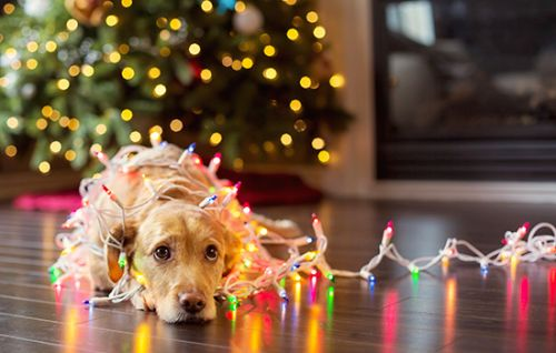 Naughty or Nice? Pet Products to Save Your Holiday