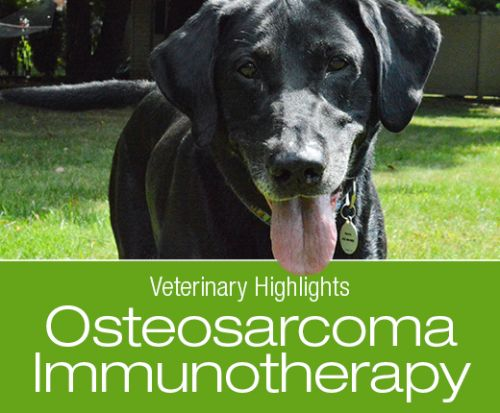 Veterinary Highlights: Immunotherapy for Canine Osteosarcoma Preliminary Study Results