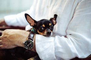 Why More Workplaces Should Be Dog-Friendly