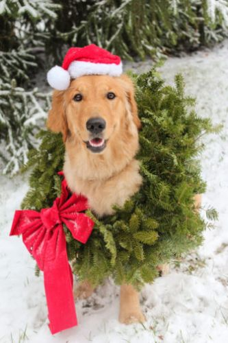 Making the Most of the Holidays With an Assistance Dog
