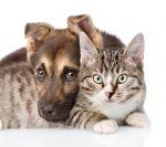 5 Myths About Dogs and Cats Debunked!