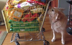 New Pet Food Label Changes Will Make Reading Nutrition Facts Easier Than Ever