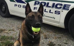 Officer Writes Stern Letter To K9 Who Damaged Patrol Vehicle During Traffic Stop